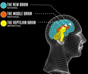 Neocortex on Three Parts Of The Soul